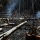 Amazon Rainforest Clear-cutting of Trees Causing Deforestation