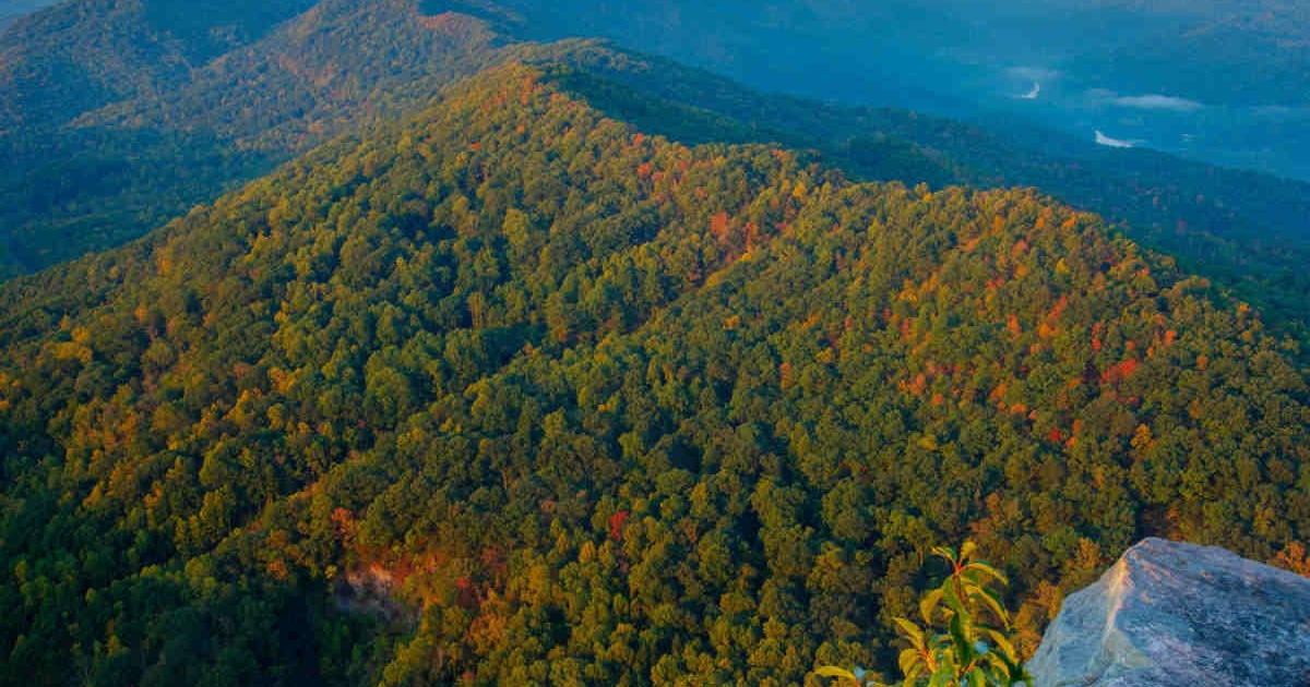 Beautiful view of the Appalachia Forest