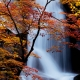 Tree in Front of Magnificent Waterfall