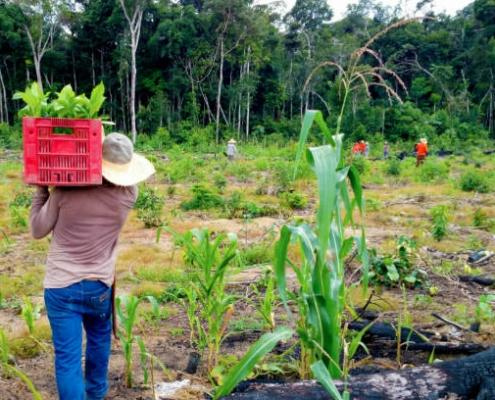 Brazil Amazon Rain Forest