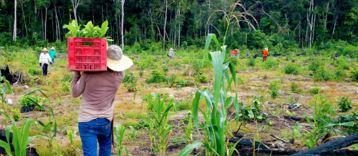 Planting trees in the ravaged Amazon rain forest of Brazil