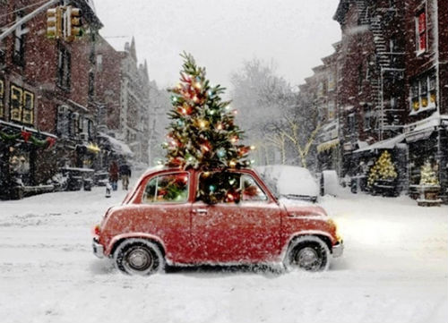 Christmas Tree in a Car