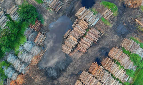 Stacks of trees cut down as the result of deforestation