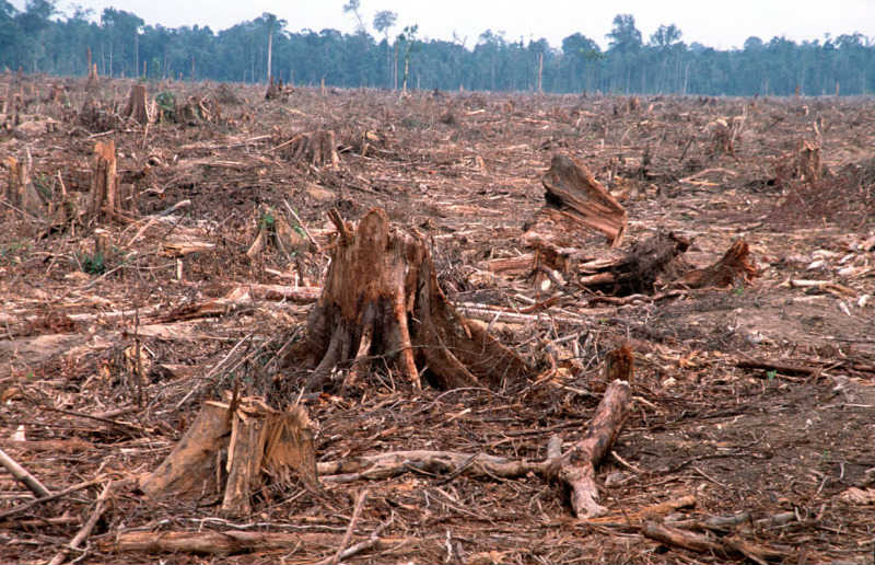 Tree clear-cutting showing the ravaging effects of deforestation
