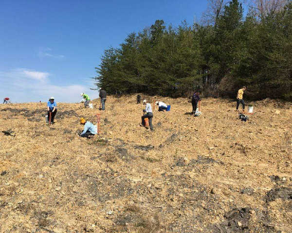 The Gifted Tree's planting project in the Appalachia Forest