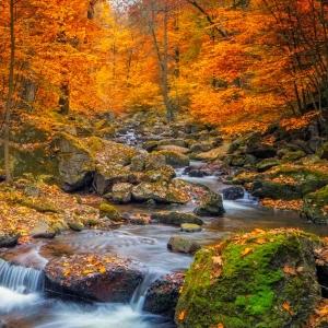 CelebrationDigital eCard Front - Forest Stream