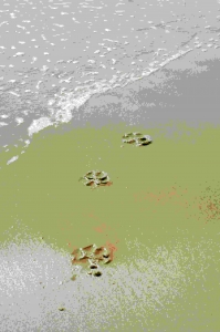 Dog paw prints in the sand