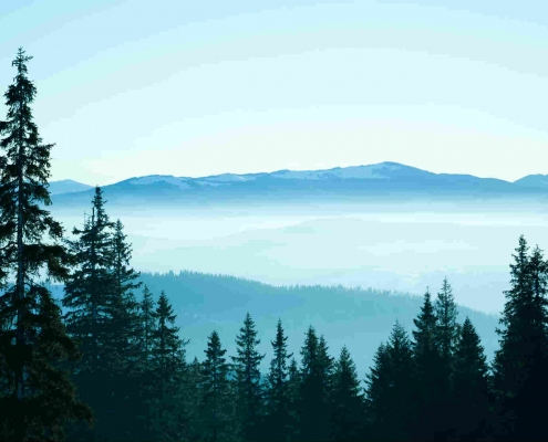 Forest scene with cloud shrouded blue-gray mountains in the background