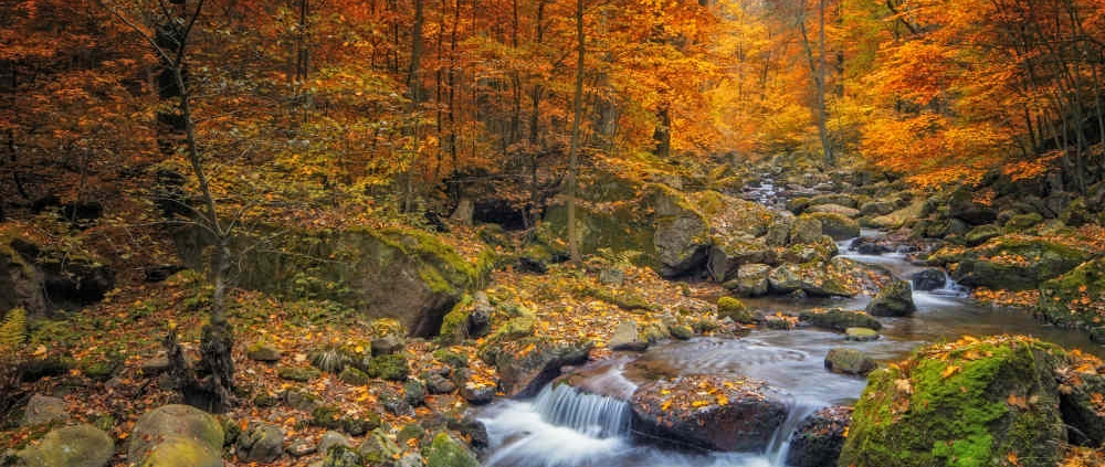 Forest and Mountain Stream