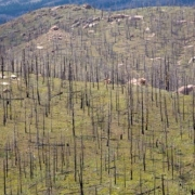 Reforestation -- How To Reforest After a Forest Fire