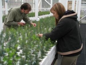 Growing tree saplings in a nursery