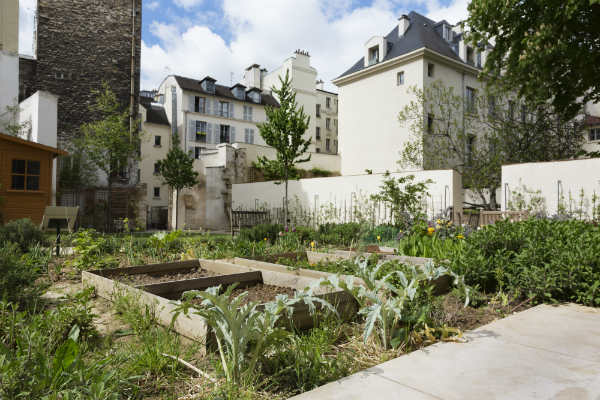 Urban guerrilla gardening site with new plants and trees