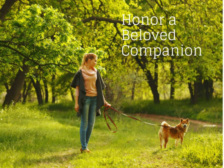 Girl Walking Dog in Forest to Honor a Beloved companion