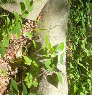 Reflection of leaf creating heart shape on tree bark