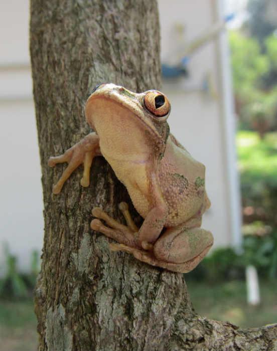 Tree frog on tree