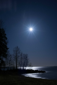 Trees at Night with Star above along a lake's edge