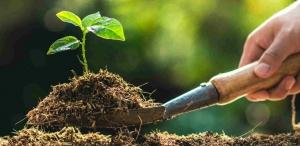 Person planting a tree sapling
