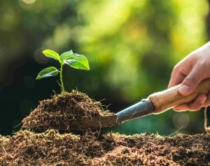 Planting a Tree sapling in Rich Soil