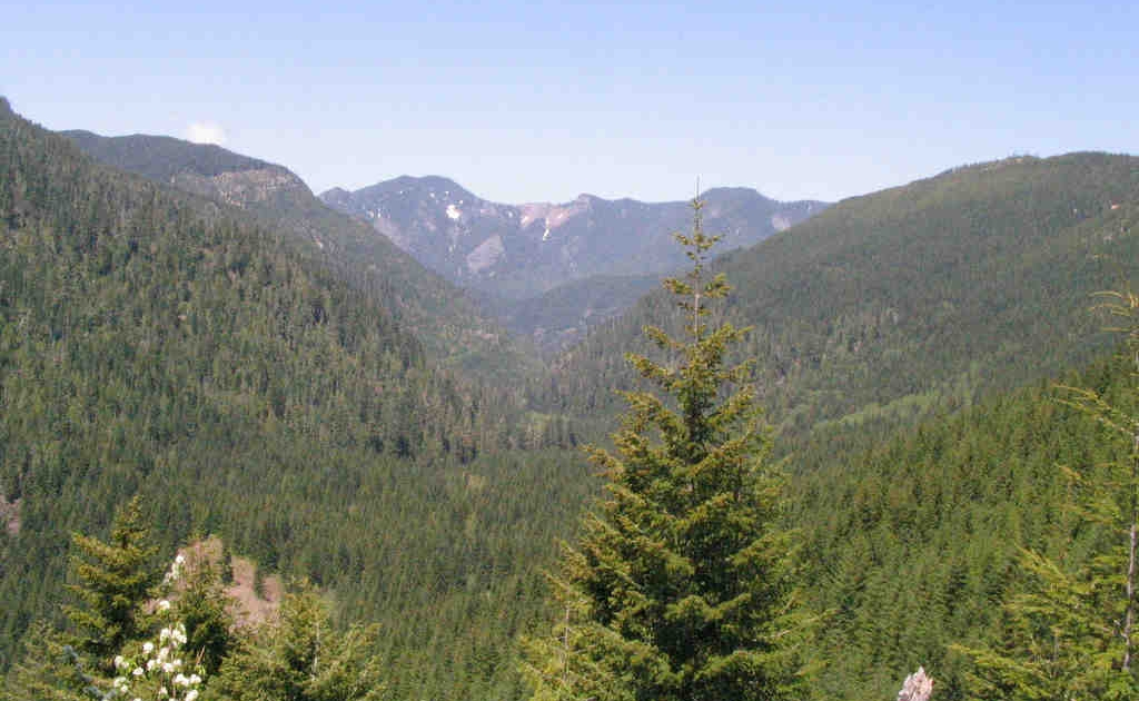 Santiam State Forest Oregon a The Gifted Tree Planting Location