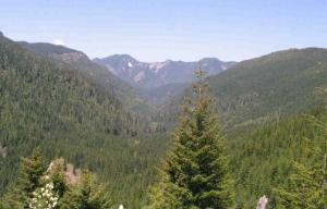 Santiam State Forest Oregon