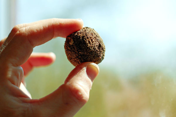 Person holding a seed bomb ball in their fingers