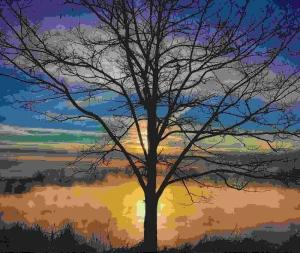 single bare tree at sunset