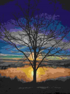 Single leafless tree with colorful sunset behind