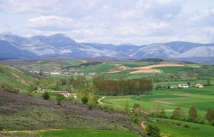 Landscape of planting area in Spain