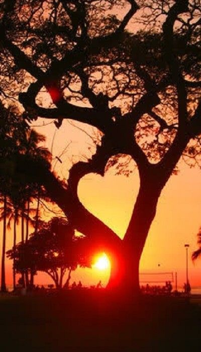 How To Write a Sympathy Letter Heart Tree