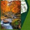 Memorial Digital eCard Front - Forest Stream