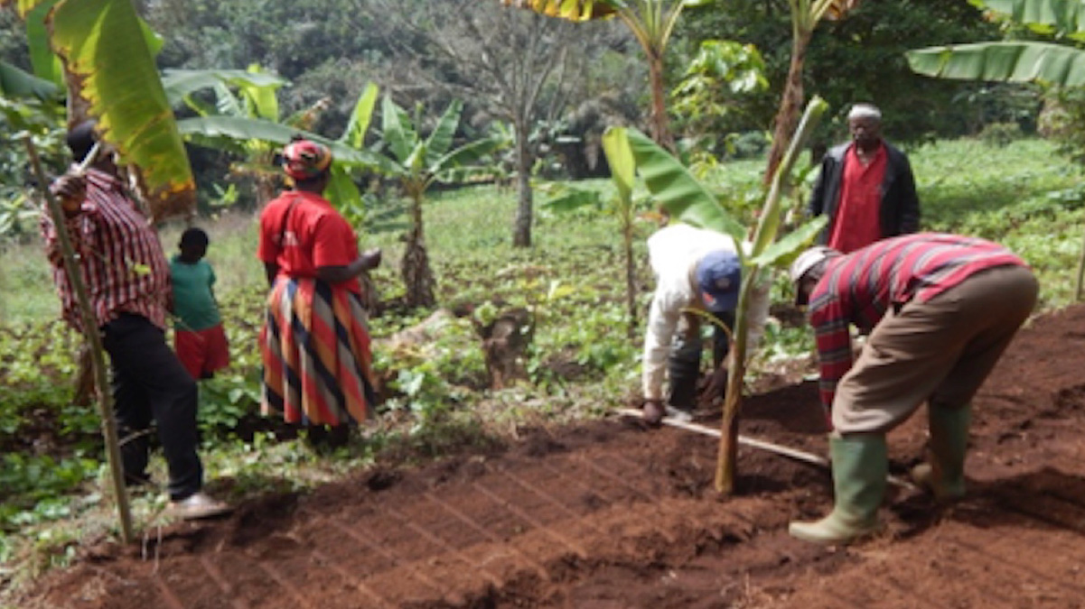The Gifted Tree planting project in Cameroon