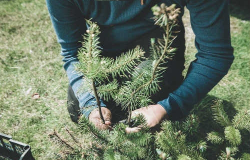 Replanting trees in deforested areas