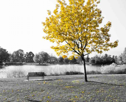 Lone tree next to an empty bench by a lake