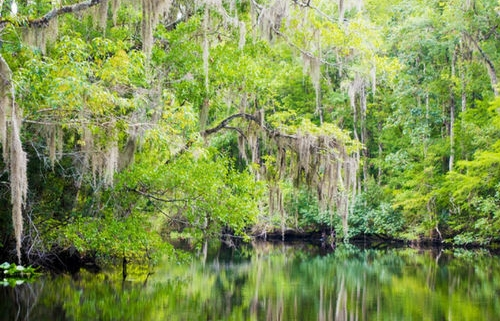 Mangrove forest restoration project in the state of Florida, one of The Gifted Tree's planting locations