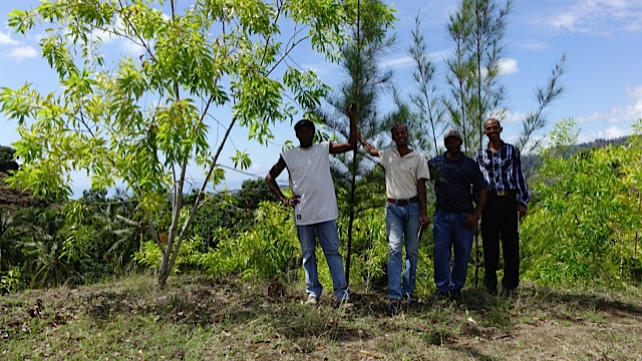 The Gifted Tree planting project in Haiti
