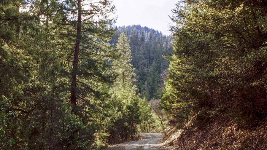 Beautiful forest scene in one of The Gifted Tree's planting locations KLAMATH NATIONAL FOREST, CALIFORNIA
