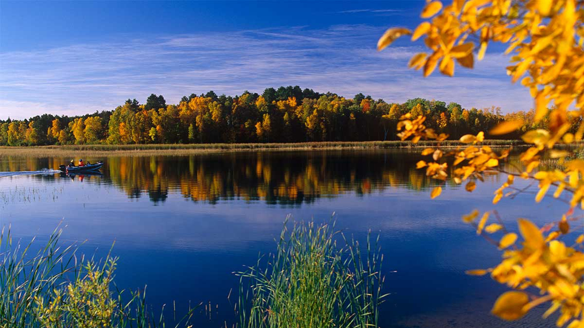 Beautiful forest scene in one of The Gifted Tree's planting locations CHIPPEWA NATIONAL FOREST, MINNESOTA