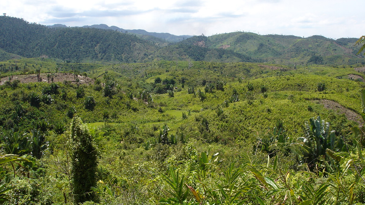 The Gifted Tree planting project in Madagascar