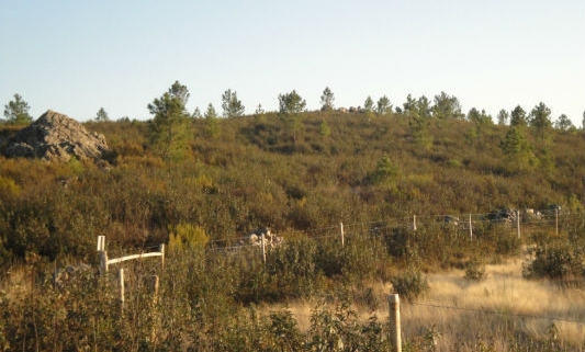 The Gifted Trees Planting Location in Portugal