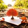 Oak Tree 3-D Pop-Up Card Lifestyle view