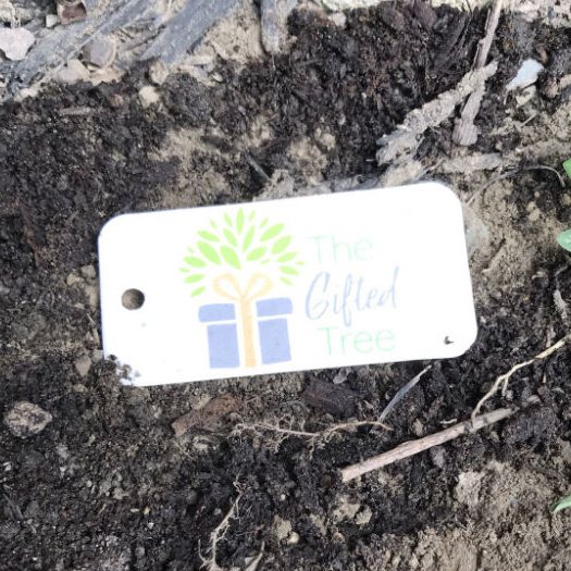 The Gifted Tree plantable Seed Tag