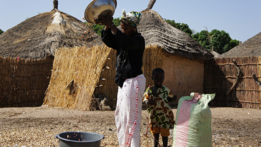 The Gifted Tree planting project in Senegal helps impoverished communities