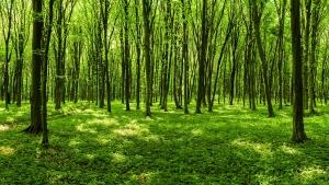 Sunny panoramic forest scene