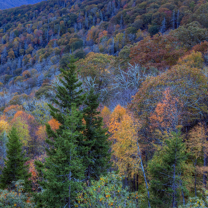 Colorful aerial forest view