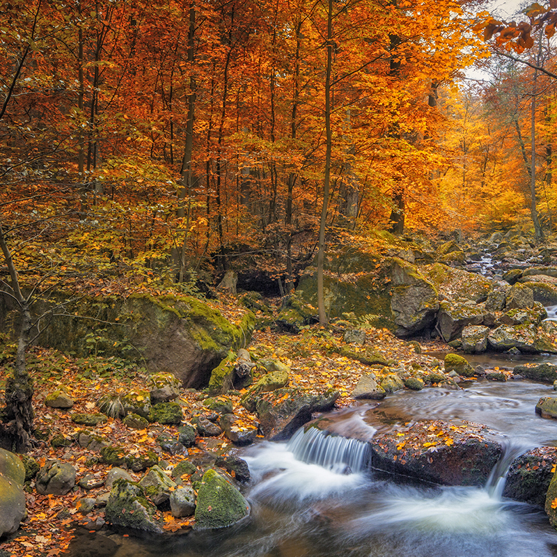 Mountain stream running through colorful forest